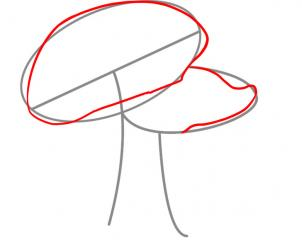 302x240 How To Draw How To Draw Mushrooms