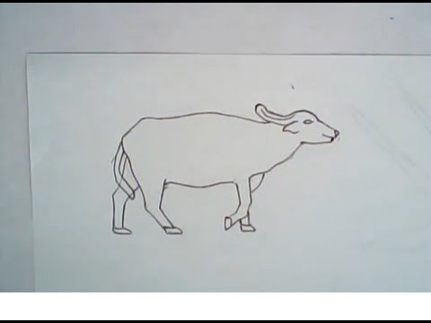 480x360 How To Draw An Asian Water Buffalo (Simple Drawing)