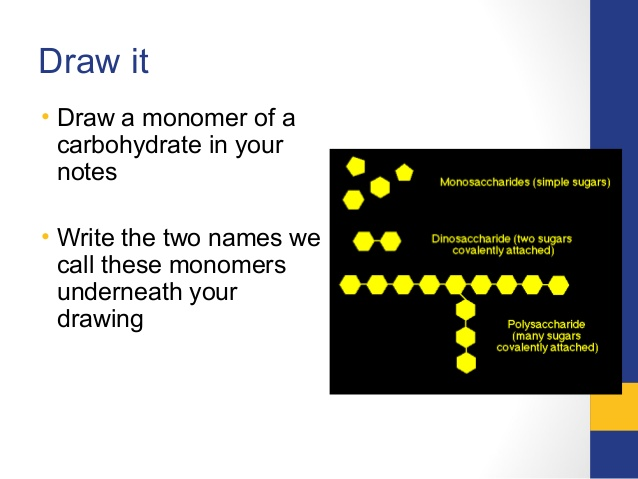 638x479 Biological Macromolecules Carbohydrates, Lipids, Proteins, Nucleic