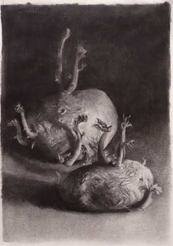 352x500 Old Potatoes Sprouting Charcoal Still Life Drawing (Carbon