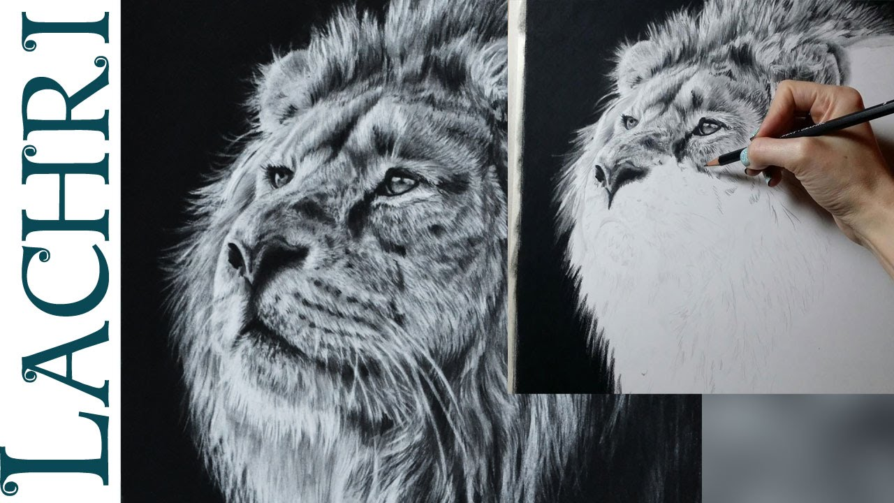 1280x720 Speed Drawing Lion In Graphite Amp Carbon Pencil
