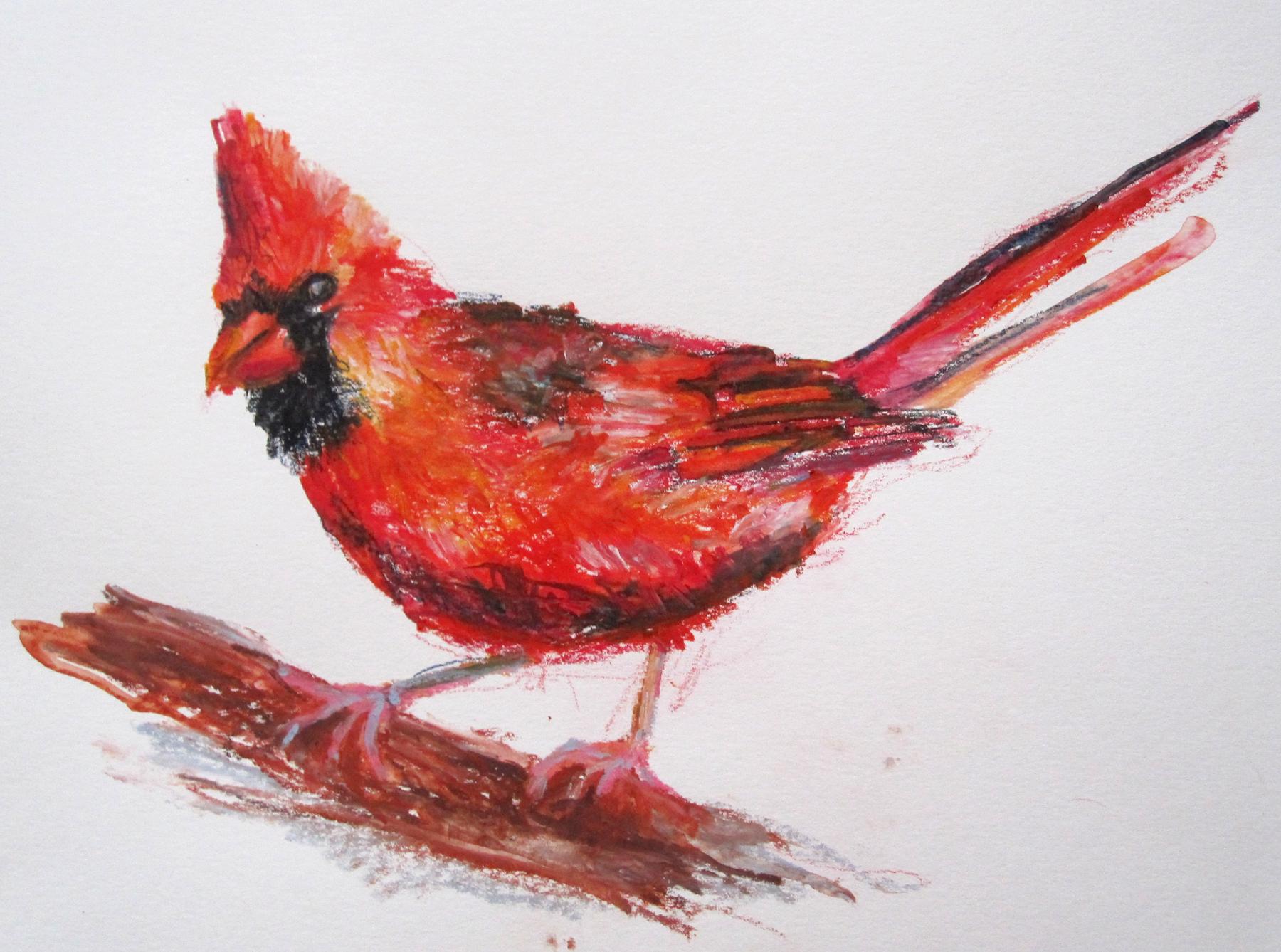 Botanical and Nature Art by Krzysztof Kowalski: Cardinal ...  |Cardinal Bird Drawings