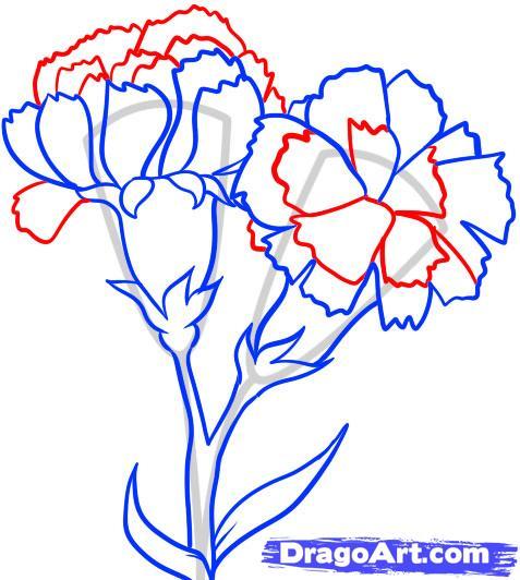 Carnation Flowers Drawing At Getdrawings