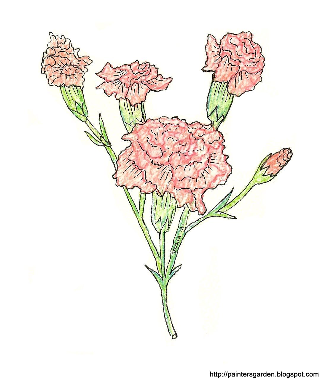 835998032 1106x1303 Paintersgarden Carnation Drawing, Colored Pencil And Ink