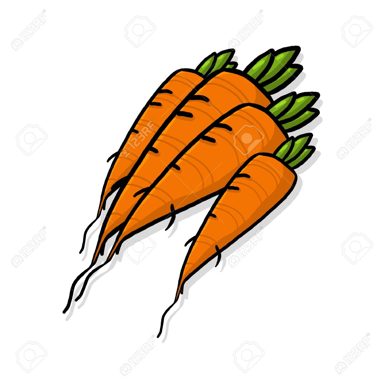 1300x1300 Bunch Of Carrots Bundle Of Carrots Drawing Fresh Carrots Root