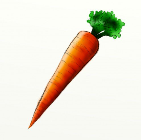 496x494 How To Draw A Carrot Feltmagnet