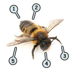 250x250 Drawing A Cartoon Bee