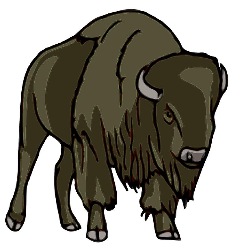 800x856 Buffalo Drawing Cartoon