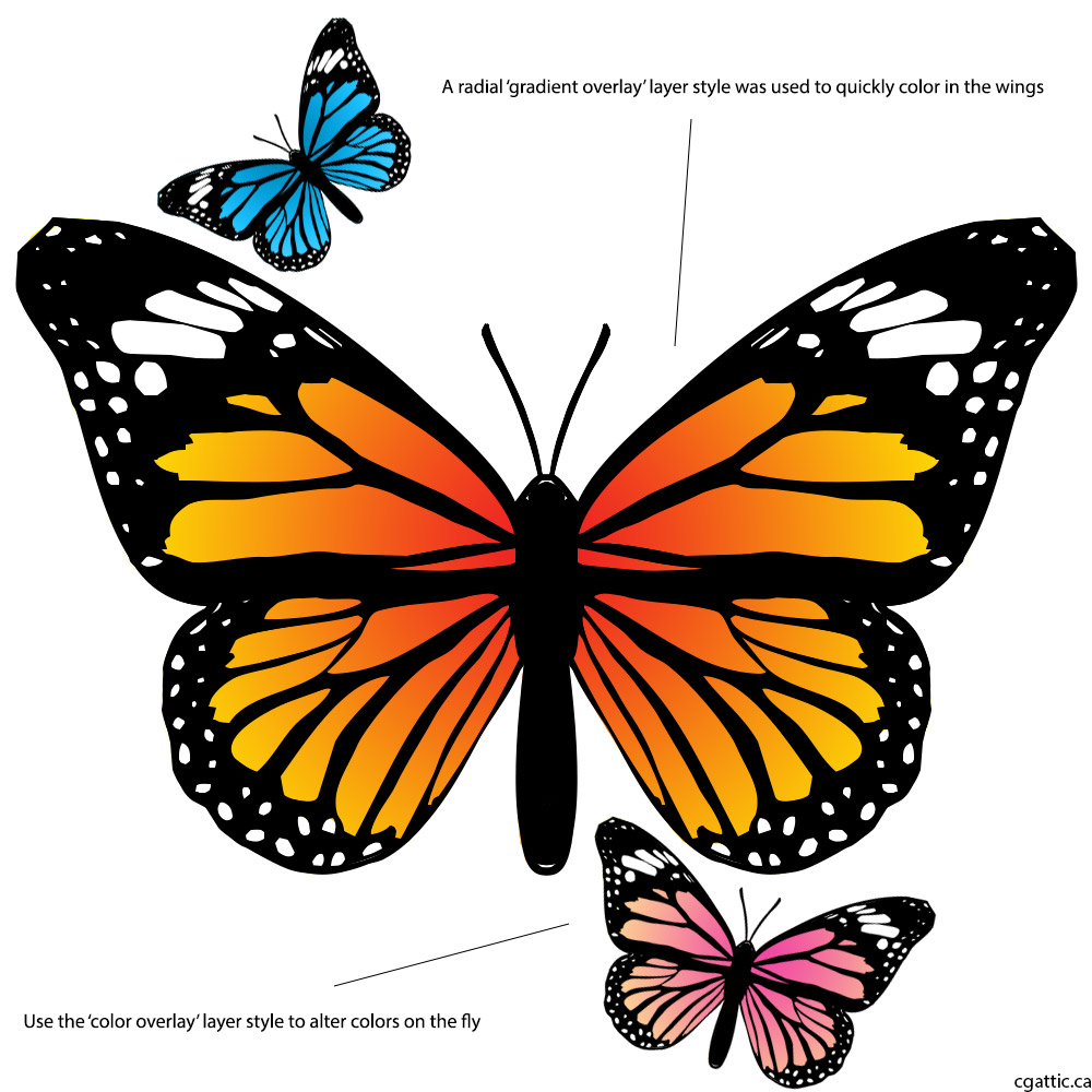 1000x1000 Butterfly Cartoon Drawing In 4 Steps With Photoshop