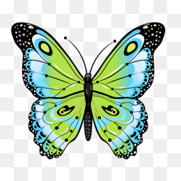 260x260 Plant Butterfly Cartoon Drawing, Cartoon, Color Of Lead, Plant Png