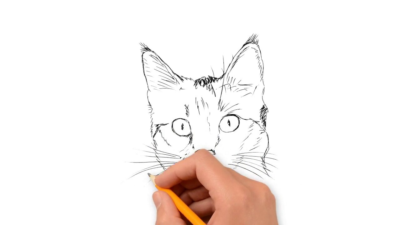 1280x720 Drawing Cartoon Cat Face Tutorial How To Easily Drawing Cats