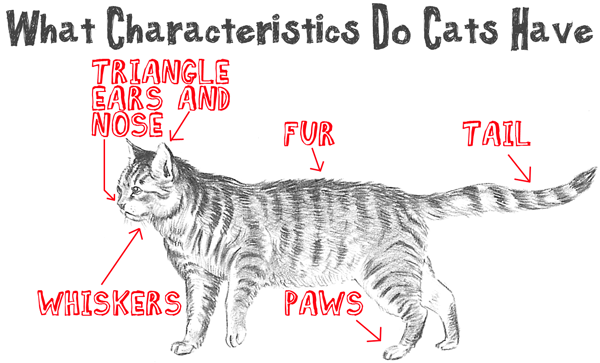 600x363 Big Guide To Drawing Cartoon Cats With Basic Shapes For Kids