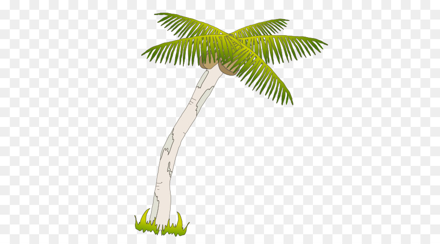 900x500 Arecaceae Coconut Drawing Tree