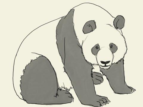 480x360 How To Draw A Cartoon Panda