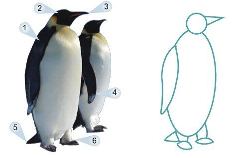 500x318 How To Draw Cartoon Penguins