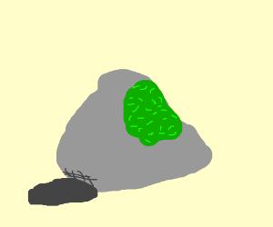 300x250 Moss (On A Rock)