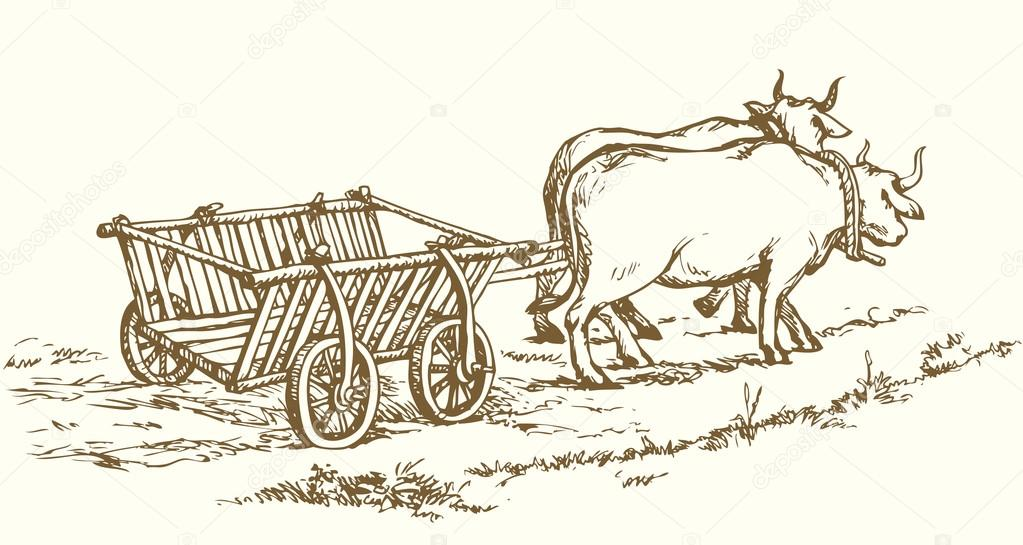 1023x545 Empty Cart Drawn By Oxen. Vector Drawing Stock Vector Marinka