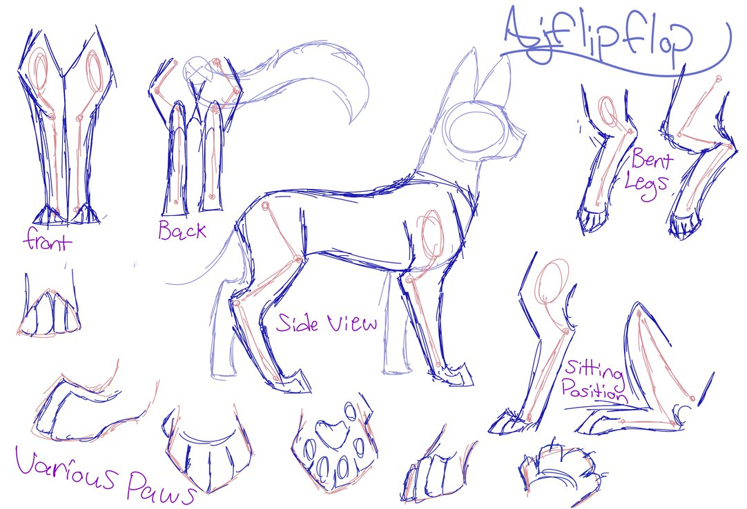 1082x738 Cat Anatomy Guide By Ajflipflop On Anatomy
