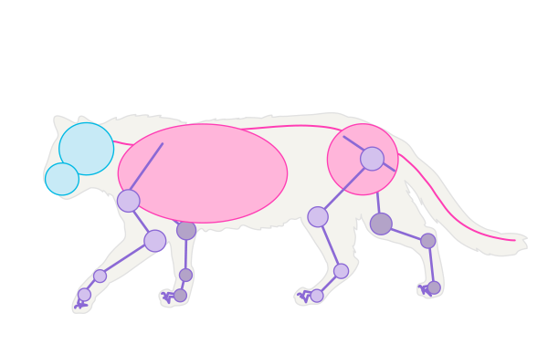 600x377 How To Draw Animals Cats And Their Anatomy