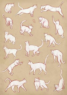 236x333 Cat Gestures Drawing Reference Guide Drawing References