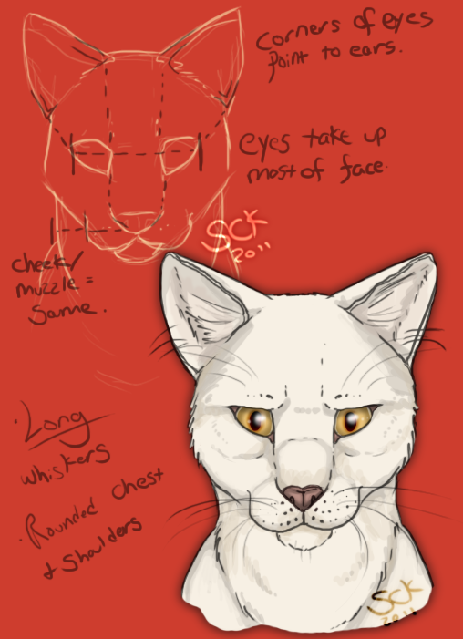 Cat Anatomy For Drawing At Getdrawings Free For Personal Use
