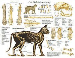 250x194 Kitty Cat Drawing Art Cats Draw Kitten House Kitteh Feline Paws