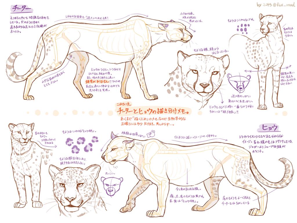 1024x768 On Drawings, Animal And Anatomy