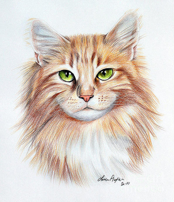 595x693 Calico Cat Drawing By Lena Auxier