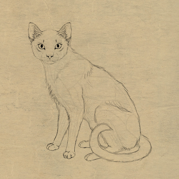 600x600 How To Draw Animals Cats And Their Anatomy
