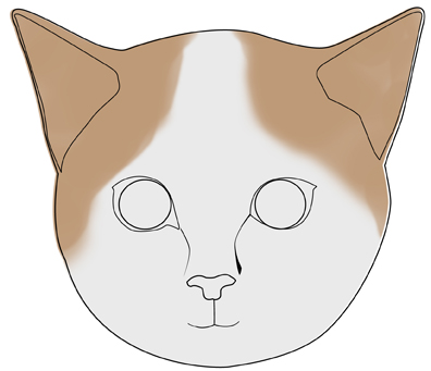 396x341 how to draw a realistic cat39s face 11 steps with pictures
