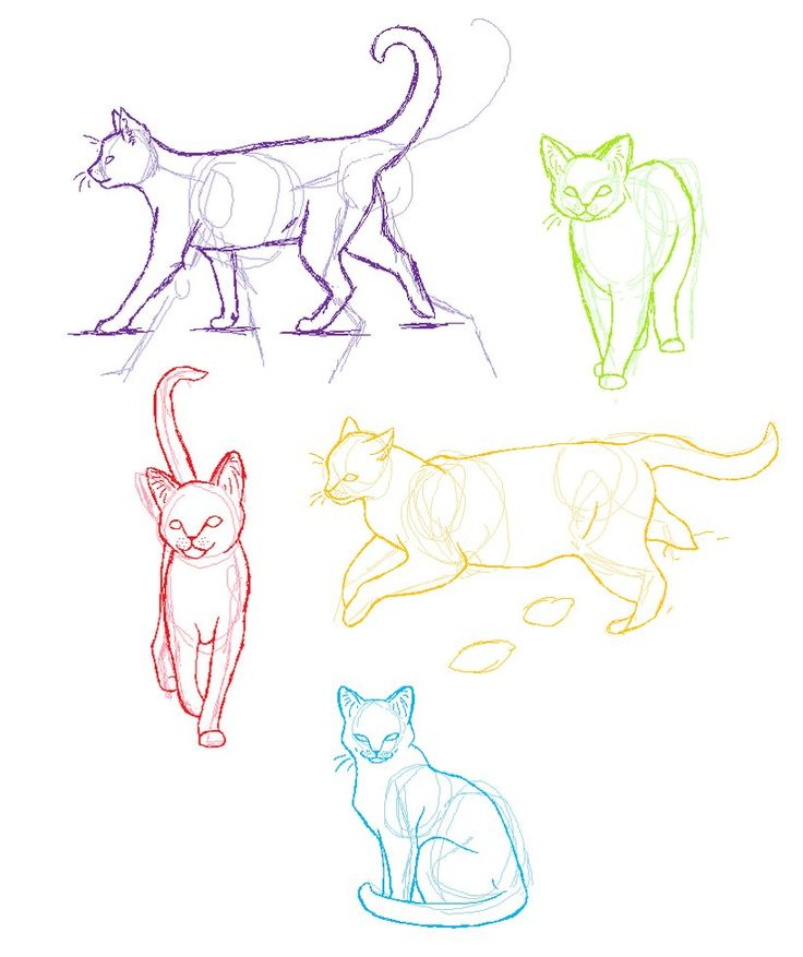 Cat Drawing Ideas at GetDrawings.com | Free for personal use Cat ...