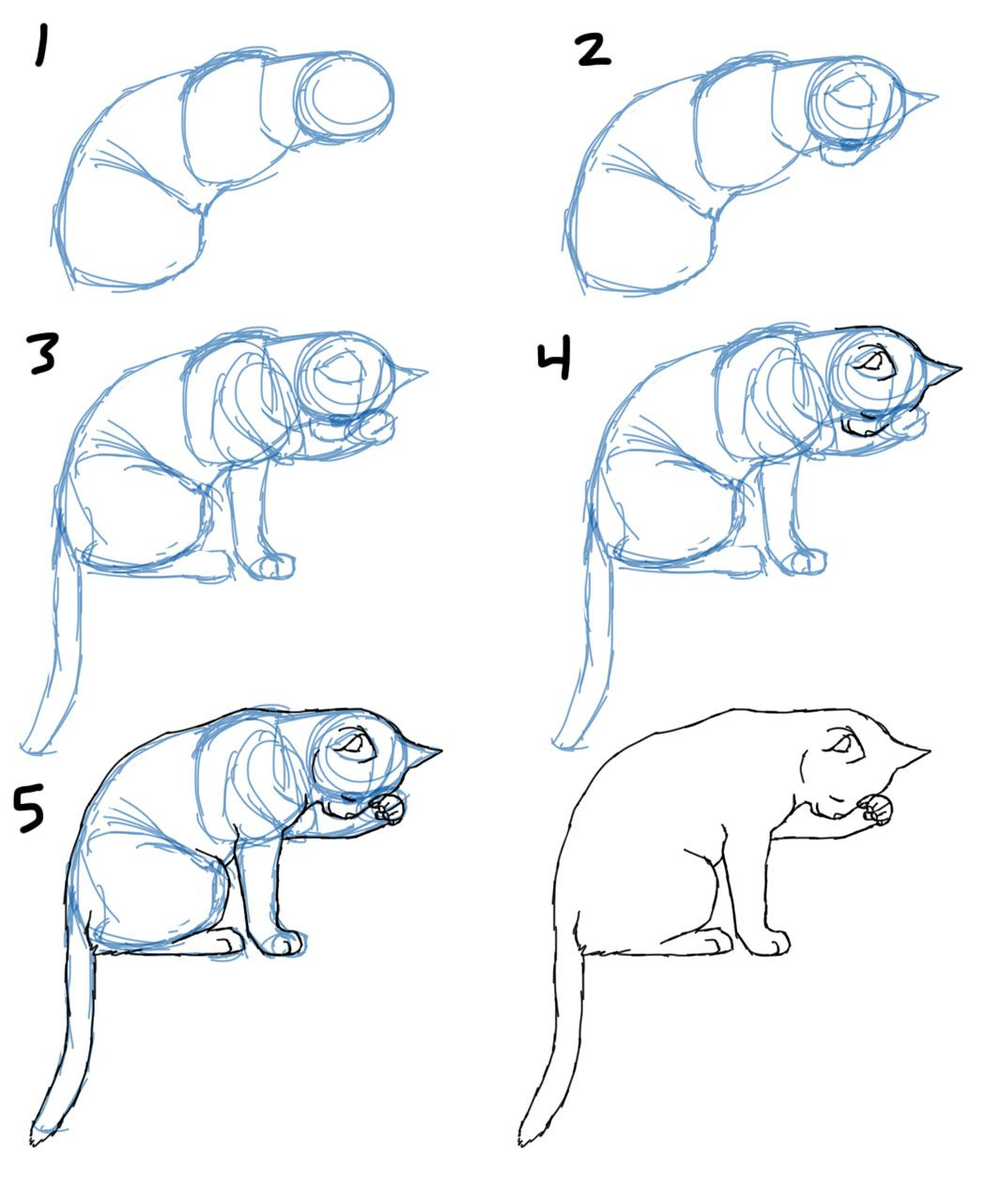 1050x1282 How To Draw Cat Bodies In Poses Savanna Williams Journaling