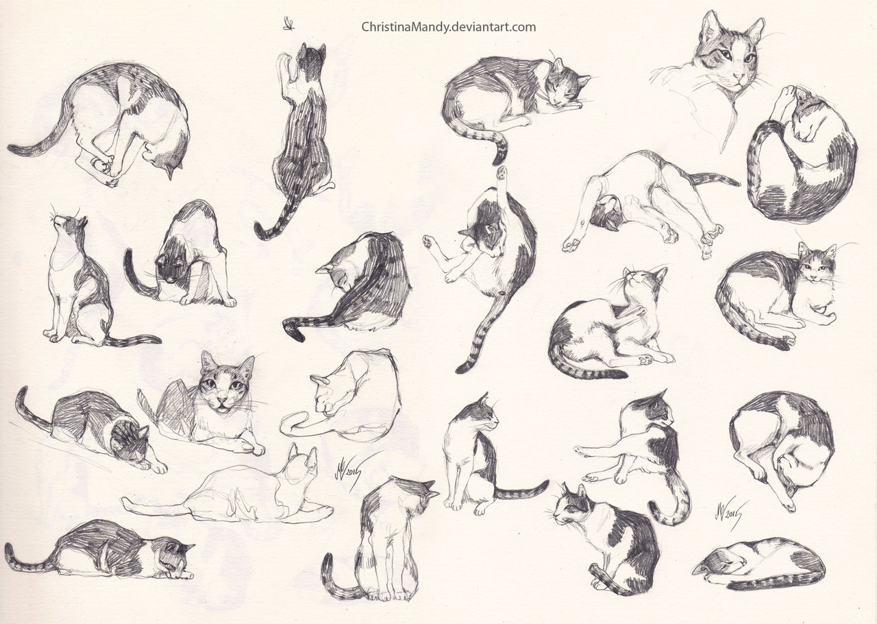 1280x910 My Cat Sketches By Christinamandy