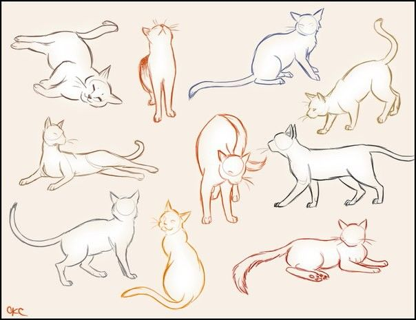 604x465 Pin By Kate Six On Sketches Cat, Cat Sketch And Draw