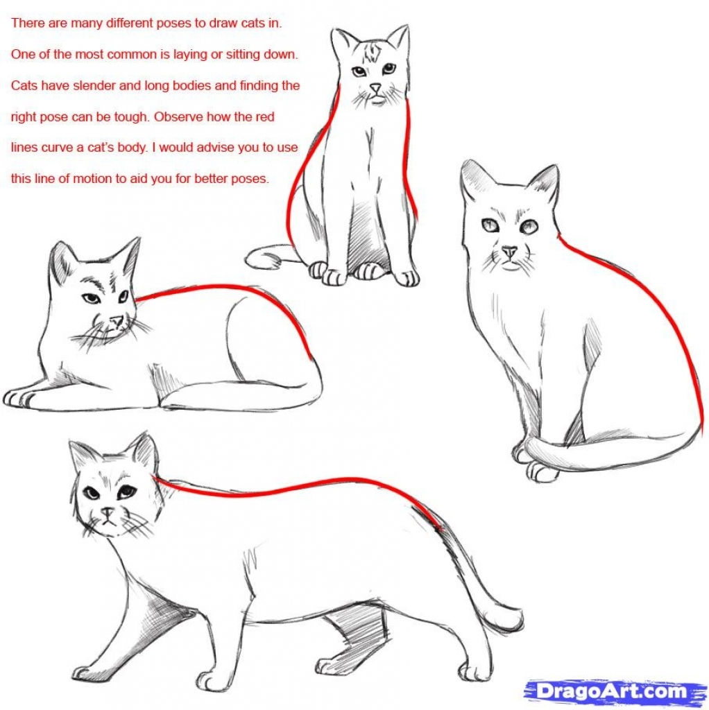 1022x1024 Steps To Draw A Cat How To Draw A Realistic Cat Draw Real Cat Step
