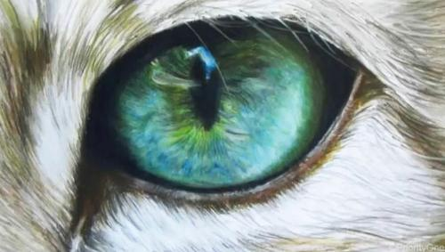 500x283 cat eyes drawing