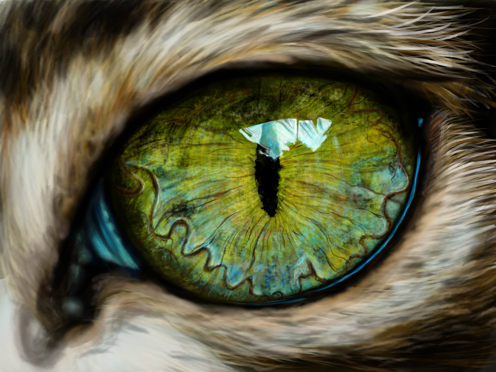 Cat Eye Drawing at GetDrawings.com   Free for personal use Cat Eye ...
