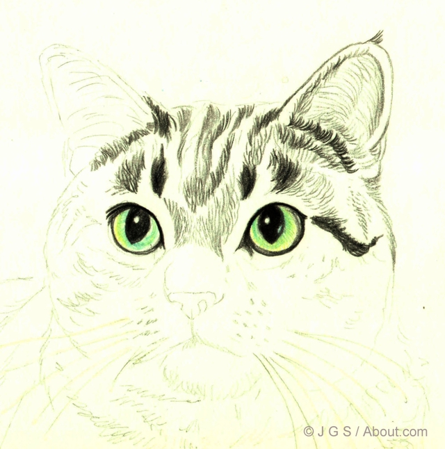 640x646 draw a majestic cat in colored pencil coloured pencils and draw