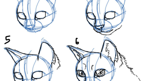 570x320 drawing a cat face how to draw cat facesheads 34 view drawing