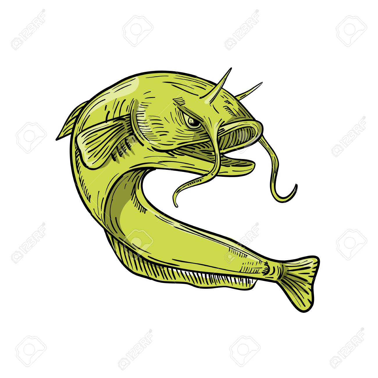 Cat Fish Drawing at GetDrawings.com | Free for personal use Cat Fish ...