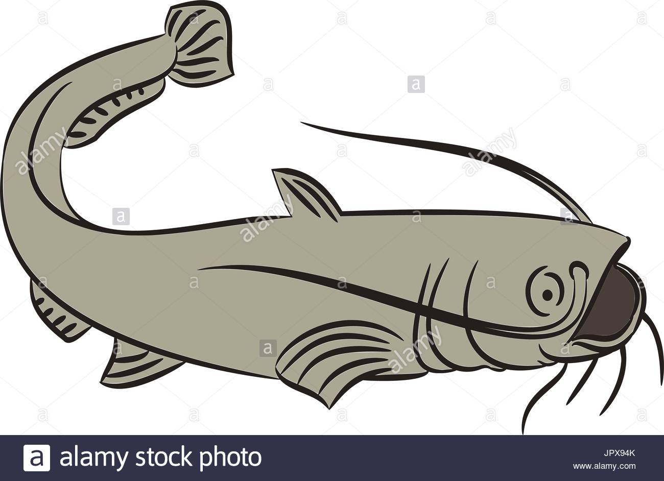 Line Art Of Fish : Cat fish drawing at getdrawings.com free for personal use