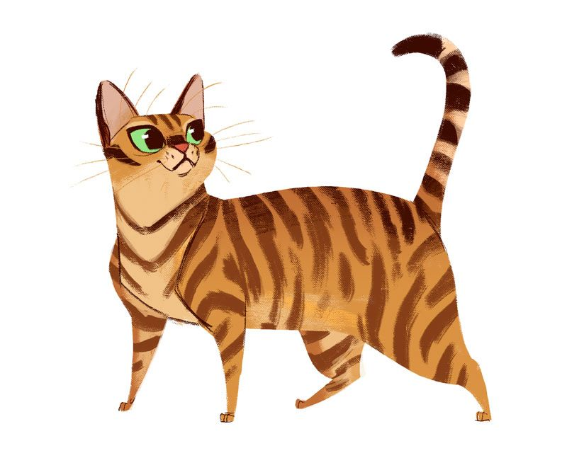 800x640 Daily Cat Drawings 619 Toyger Cats Tutorials