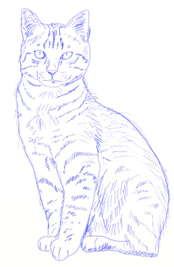 250x383 How To Draw A Realistic Cat