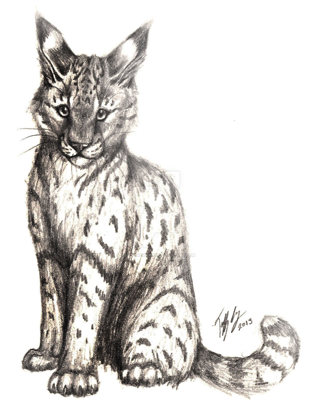1024x1375 Wild Cat Pencil Drawing By Captainmorwen