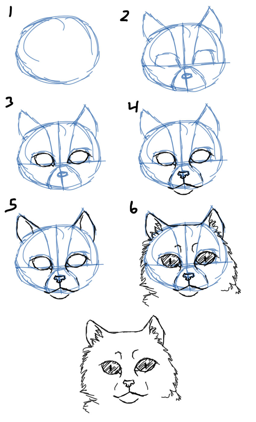 850x1400 Savanna Williams How To Draw Cats Faces Heads
