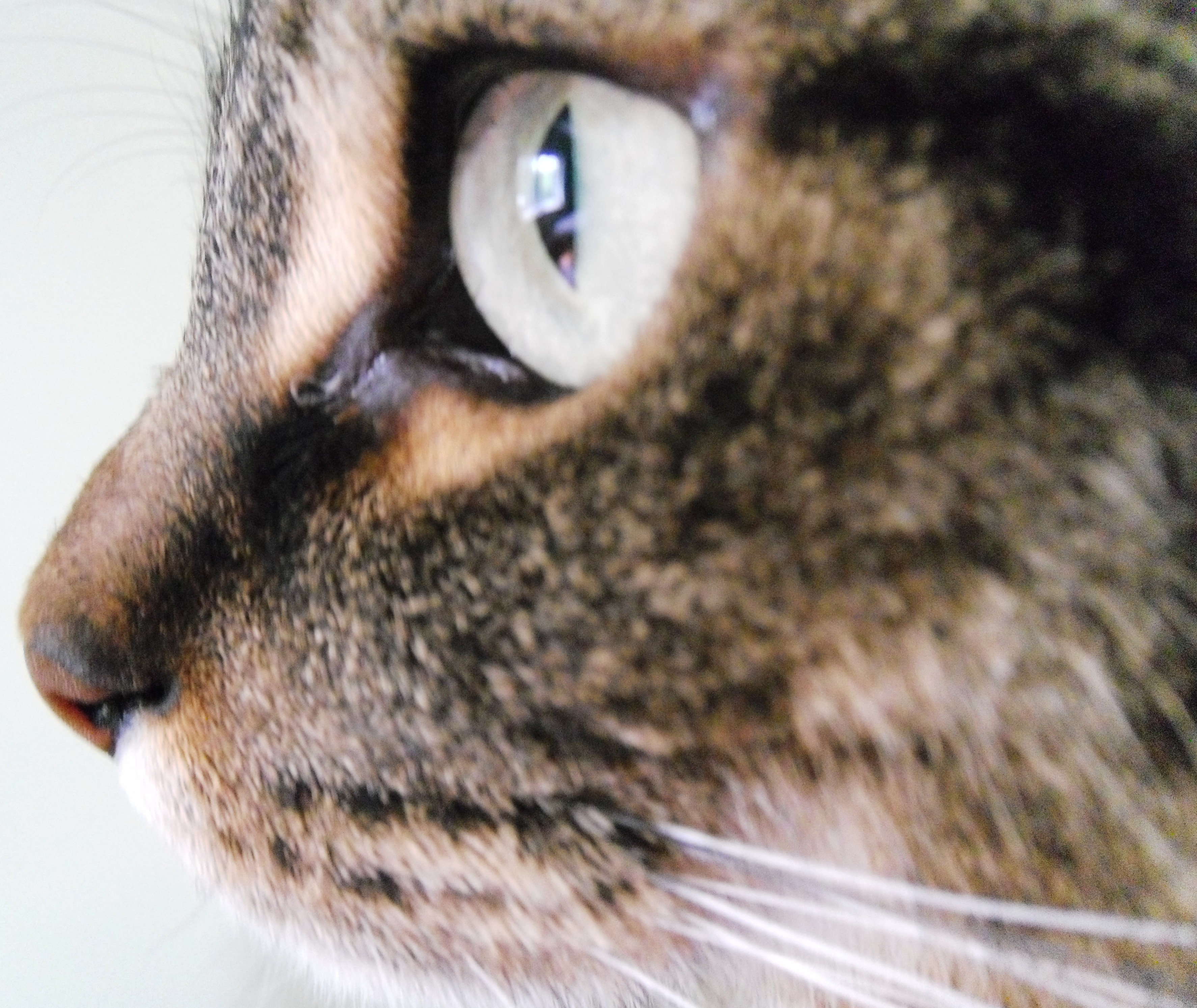 3547x2987 Cat Face Profile Teen Photograph About Animals, Nature, Cat, Cat
