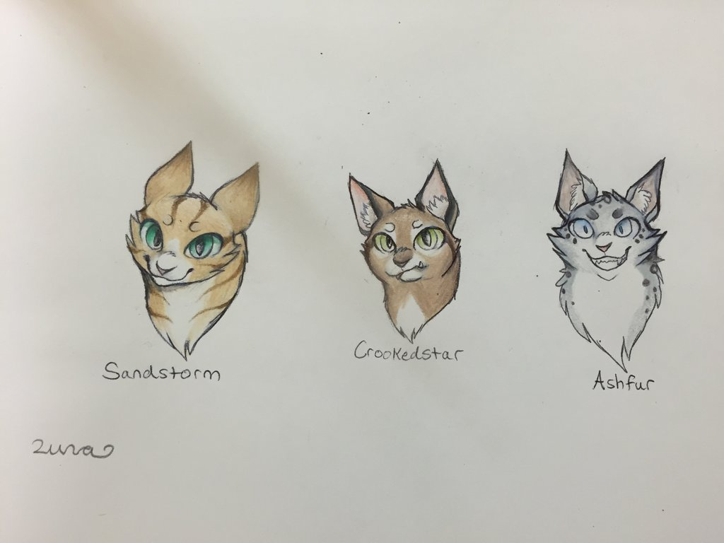 Sandstorm Warrior Cat Drawing Sketch How To Draw