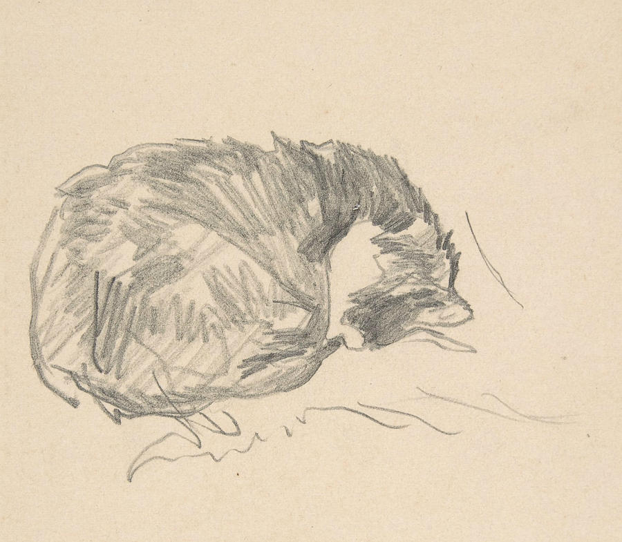 900x785 A Cat Curled Up, Sleeping Drawing By Edouard Manet