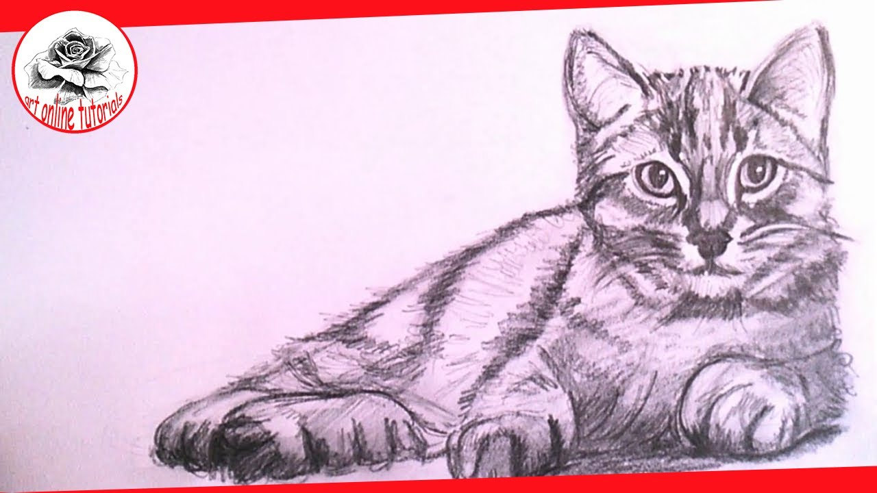 1280x720 How To Draw A Realistic Cat With Pencil Step By Step Drawing