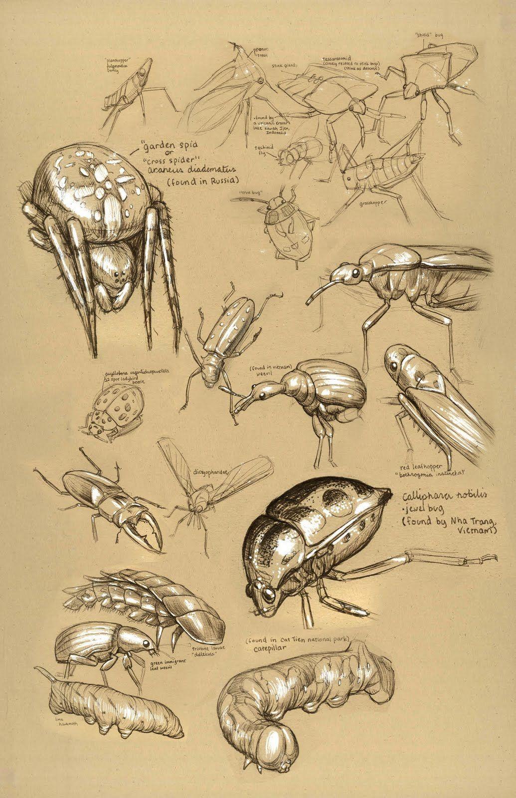 1035x1600 Banana Bees Dynamic Sketching Dynamic Sketching Animals